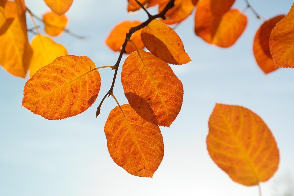 levelek