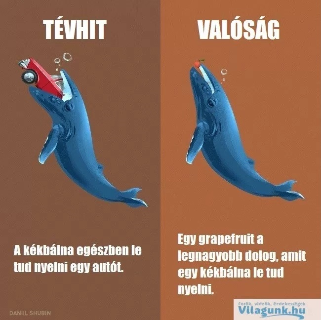 tevhit_balna