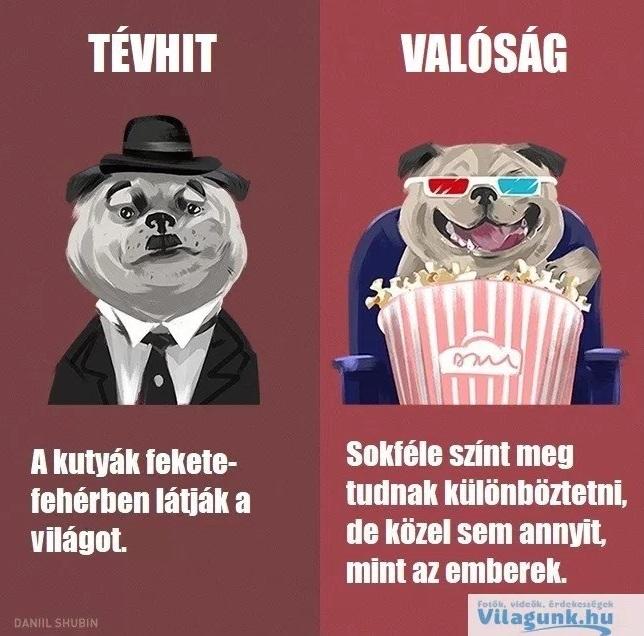 tevhit_kutya
