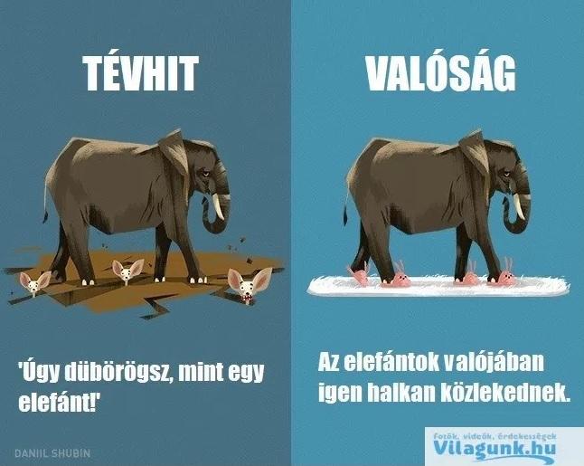 tevhit_elefant