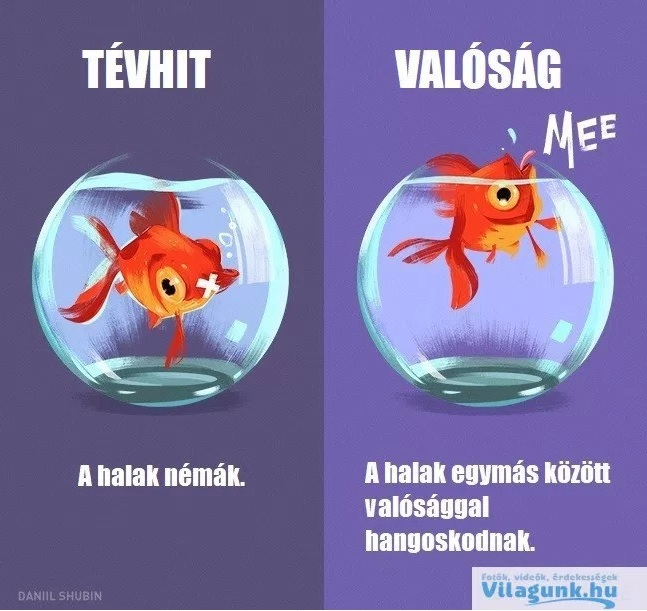 tevhit_hal